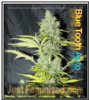 Auto Bluetooth Just Female Mix & Match Seeds
